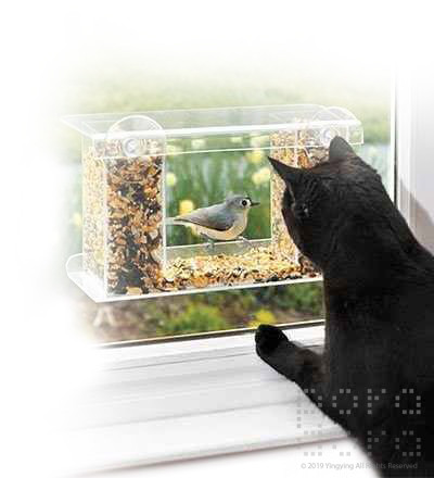 poll-window bird feeder