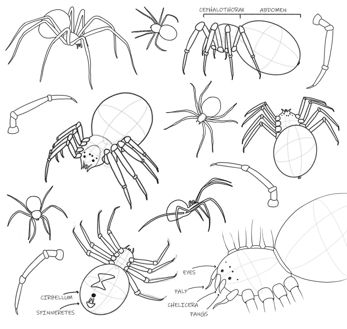 spiderdrawings