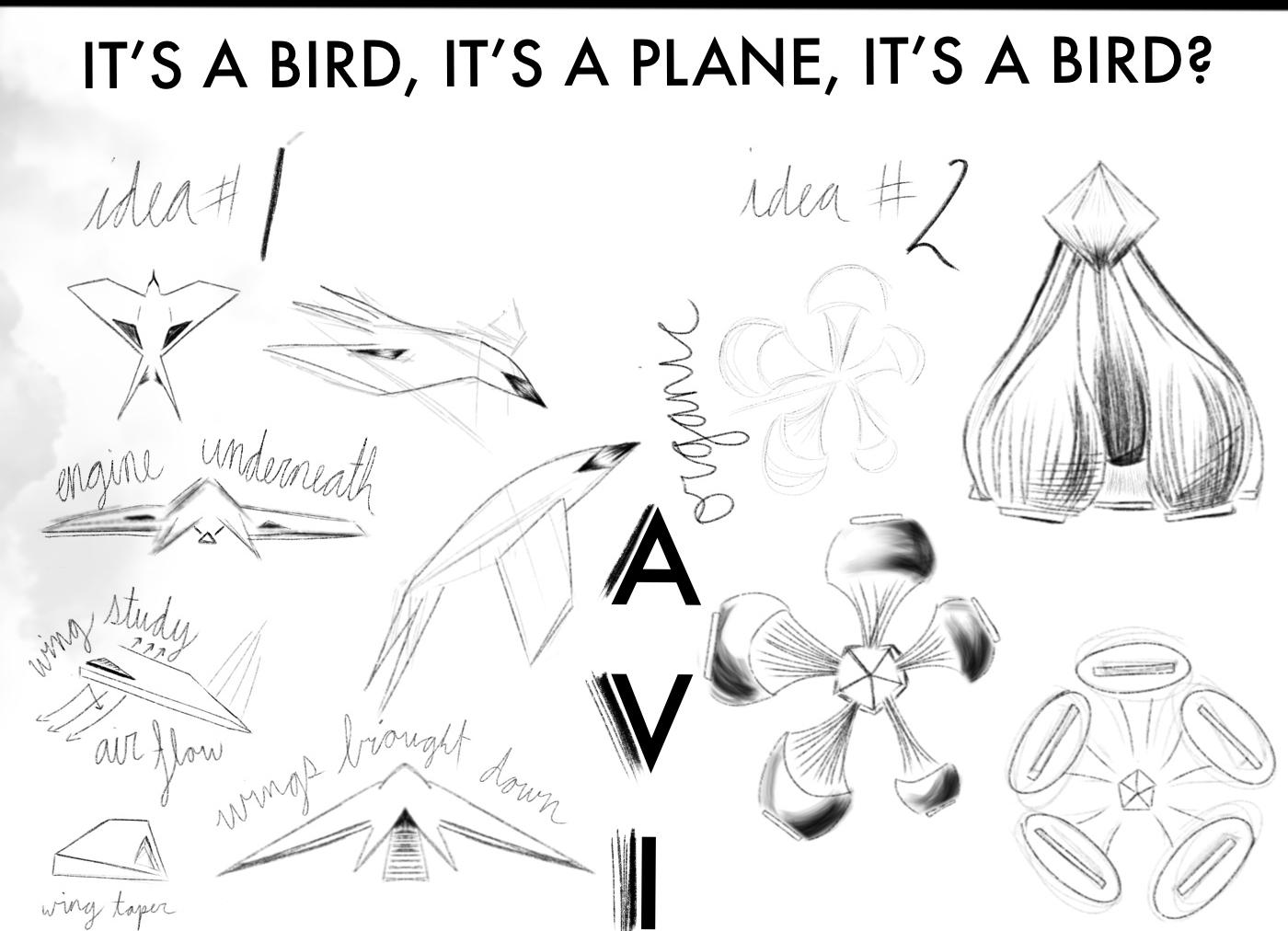 Marjorie | Bird Ship